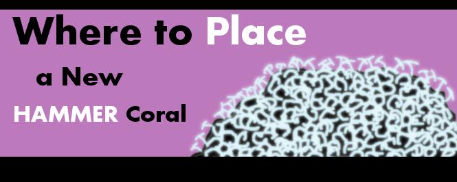 hammerhead coral placement header