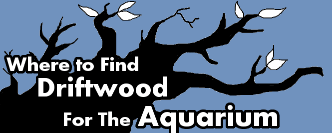 Where to Single-handedly Find Aquarium-suitable Driftwood? | Aquanswers