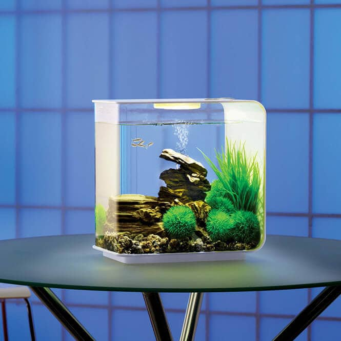 10 Best And Most Stylish Tanks For Your Betta Fish
