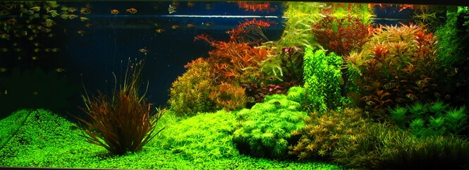A Guide to the Best Soil & intert Substrate for a freshwater