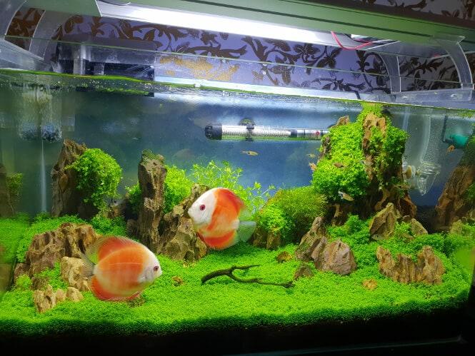 Best Led Grow Lights For Explosive Aquarium Plant Growth