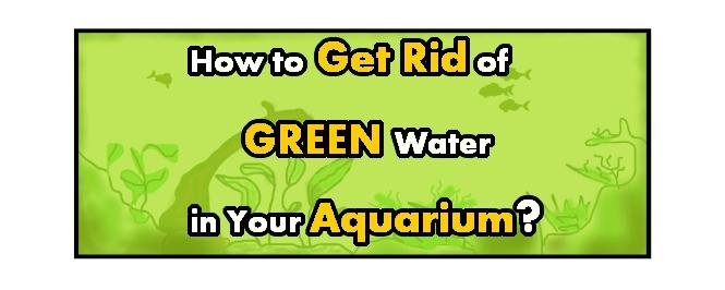 how to get rid of green water in aquarium header