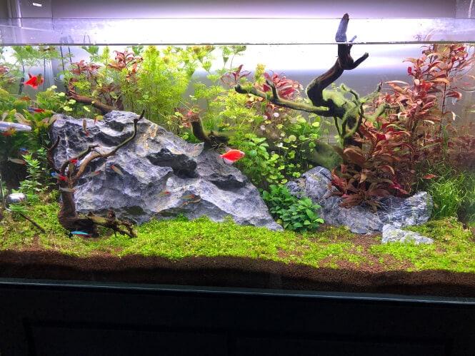 a beautiful planted fish tank