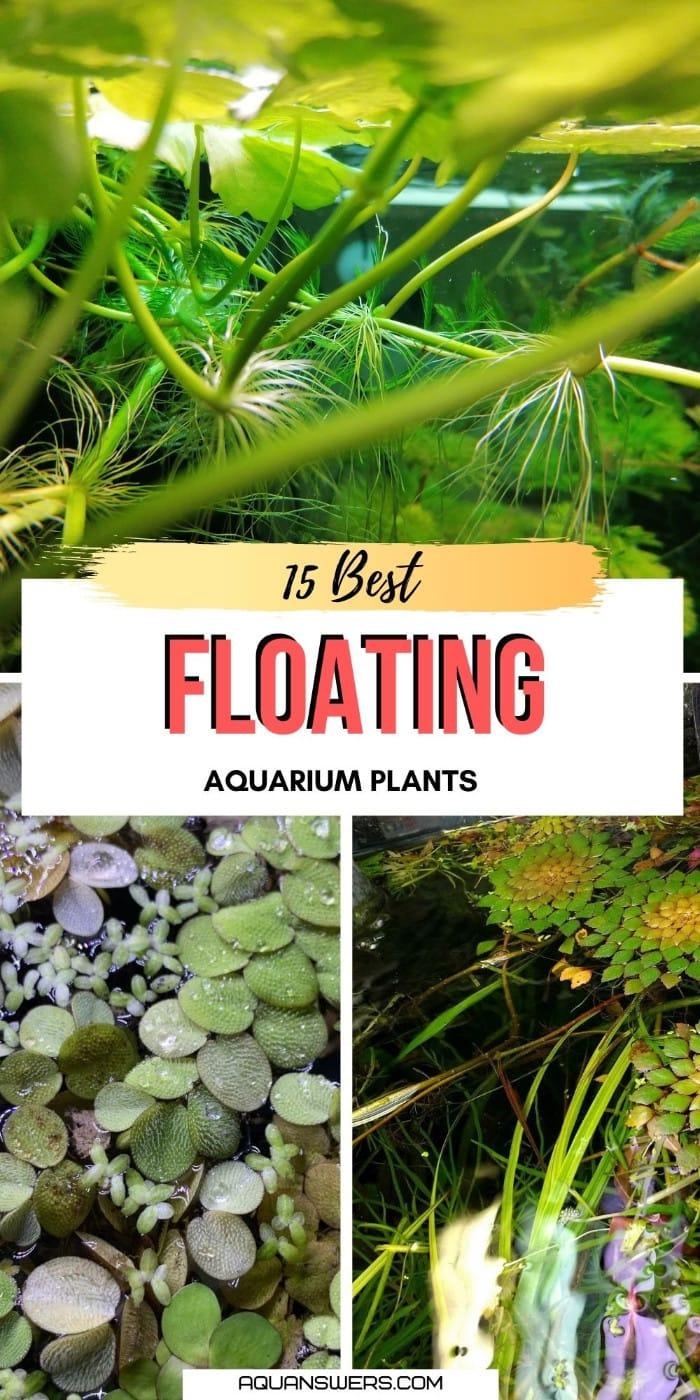 floating aquarium plants best picks