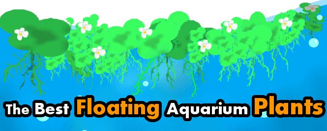 floating plants for a freshwater aquarium