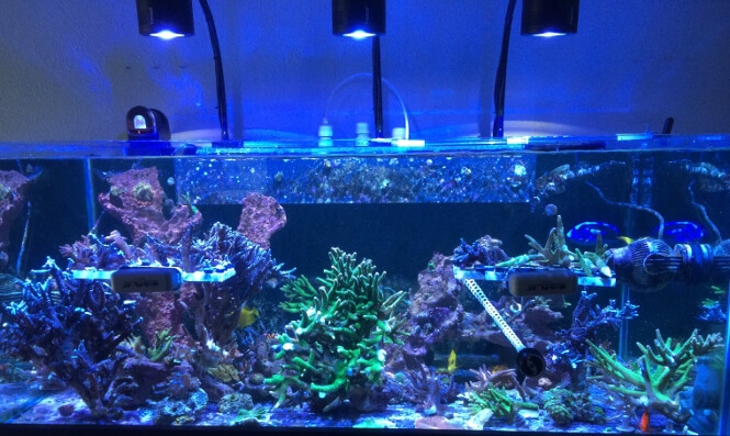 48 inch long reef tank with Kessil A360WE