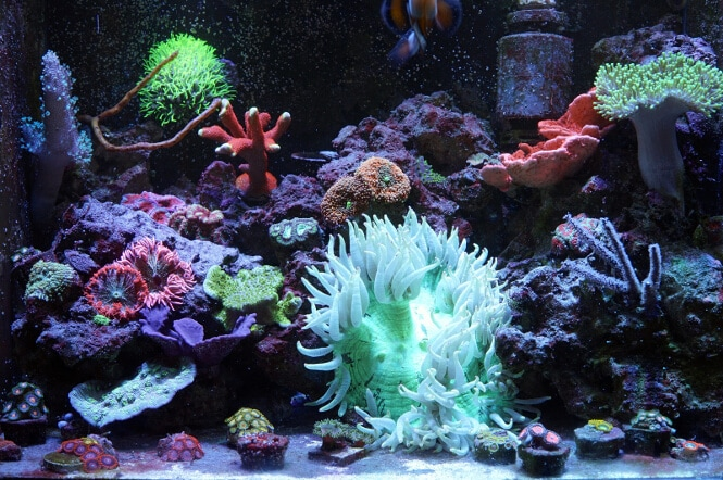 SPS and LPS corals growing
