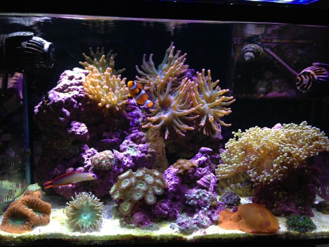 growth of LPS corals under the Current USA Orbit Marine LED lights