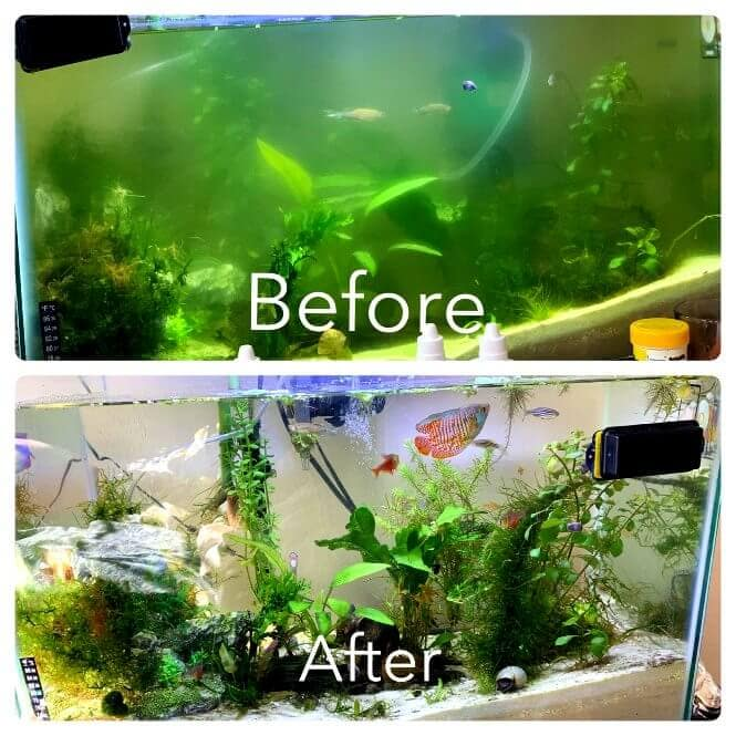 Before and after using an UltraViolet water sterilizer to clear up cloudy water in a fish tank.