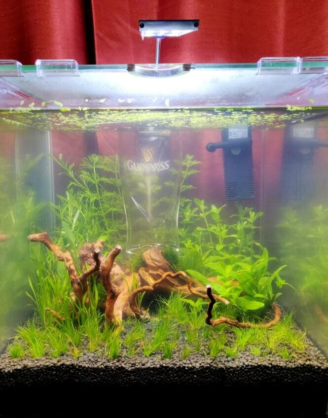 A brand new planted fish tank that's developing cloudy water.
