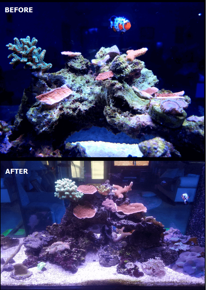 monipora cap corals