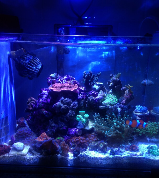 Kessil A80 over a tank with SPS corals