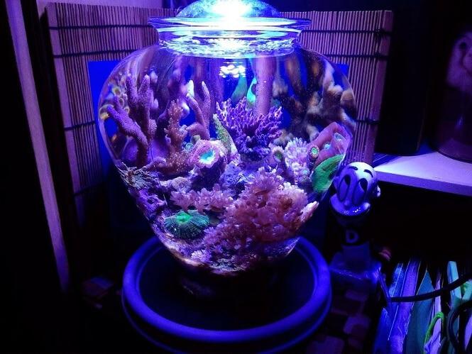 Maritza the Vase Reef