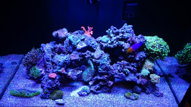 24 inches deep aquarium with viparspectra LED lighting
