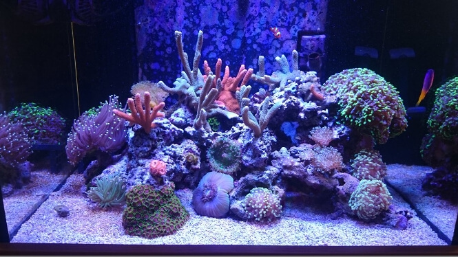coral growth progression before