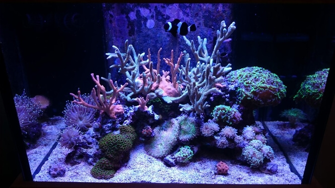 coral growth progression after