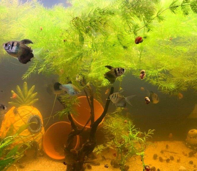 a murky aquarium