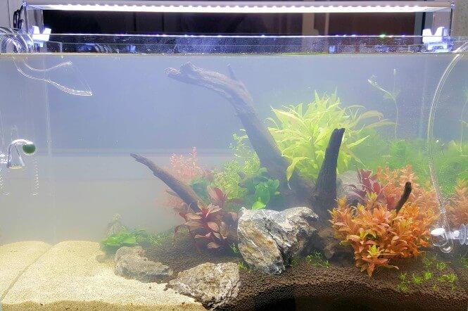 New aquarium that has cloudy water