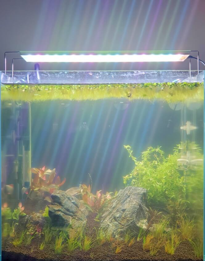 How a bacterial bloom makes the water in a fish tank foggy.