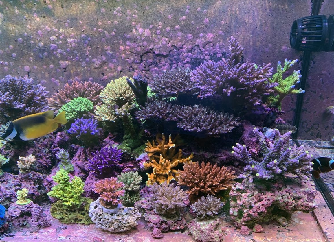 reef tank with SPS corals grown with Radion XR30 PRO GEN5