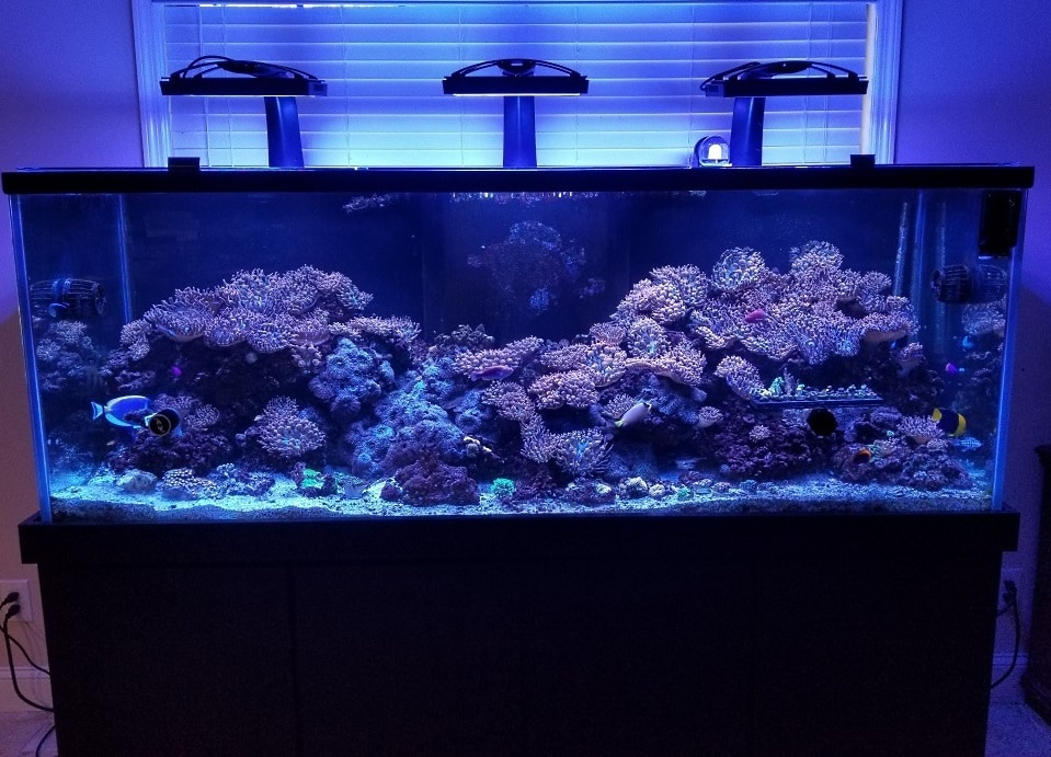 stunning reef aquarium with a lot of SPS corals