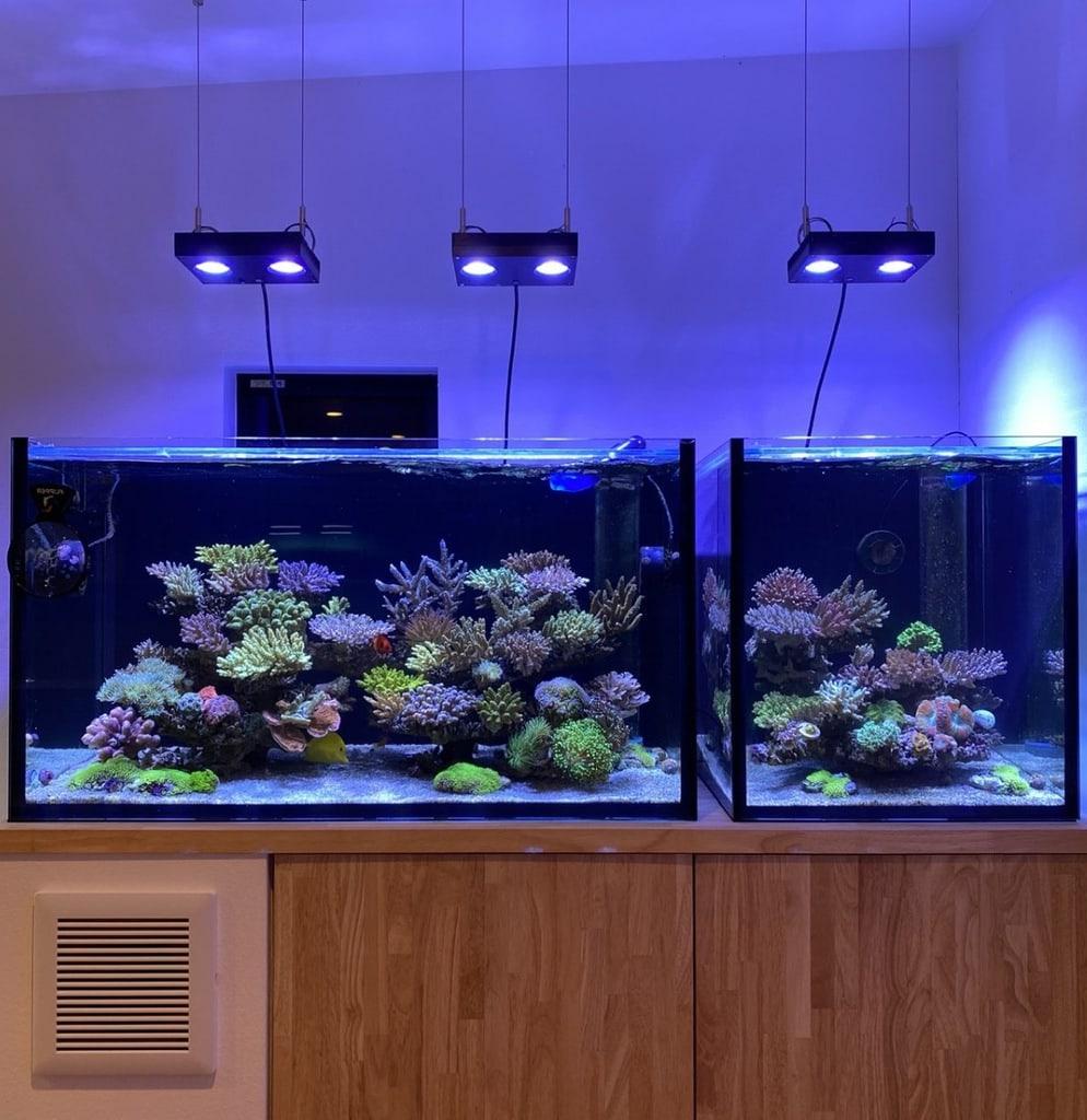 sps dominant reef tank
