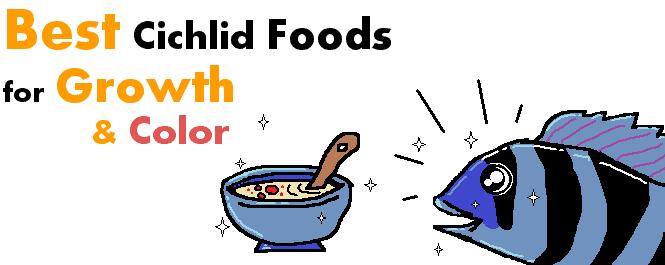 best food for cichlids growth header