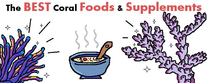 best coral food header