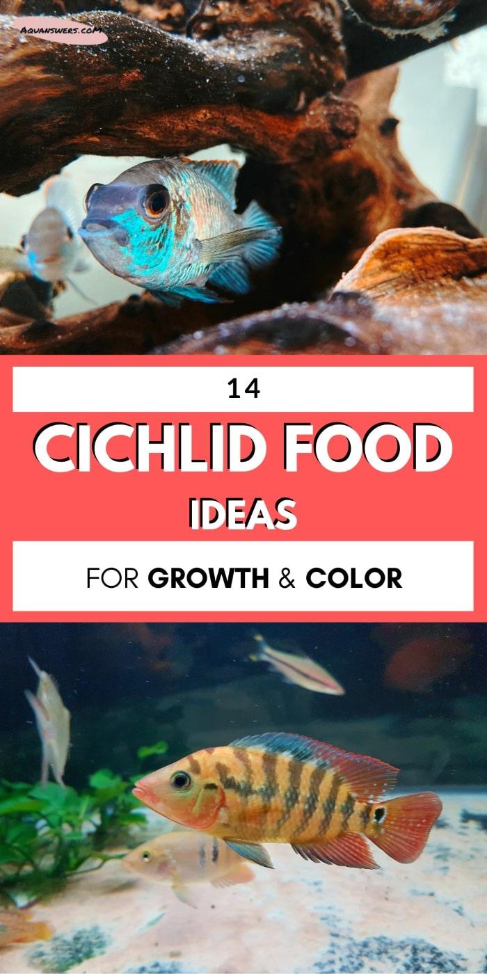 cichlid food ideas