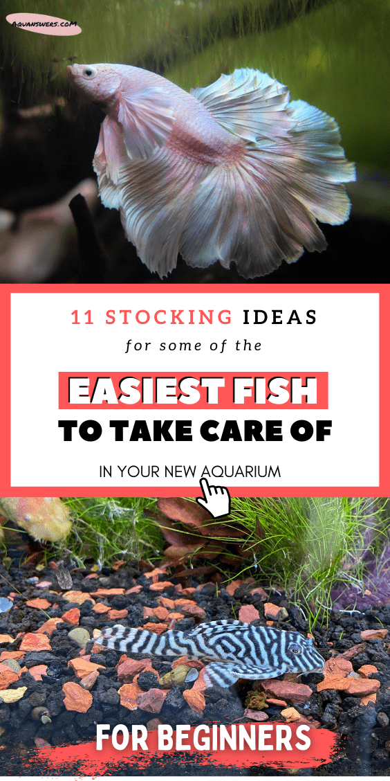 easiest fish to take care of poster