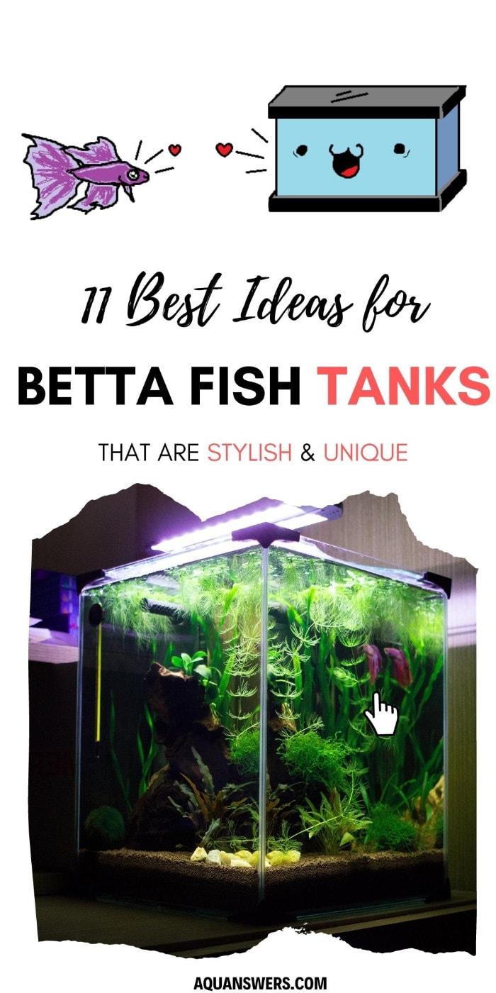 best betta fish tanks poster