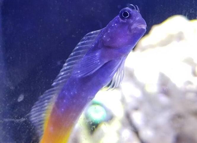 white spot disease on saltwater fish