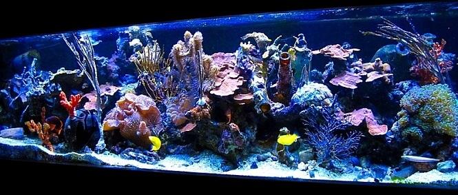 paul baldassano's 50 year old reef tank