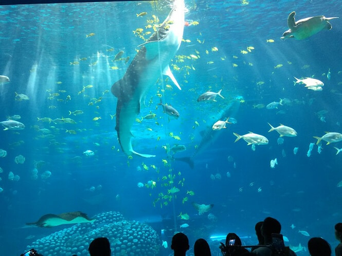 A view from the insides of the largest aquarium in the world.