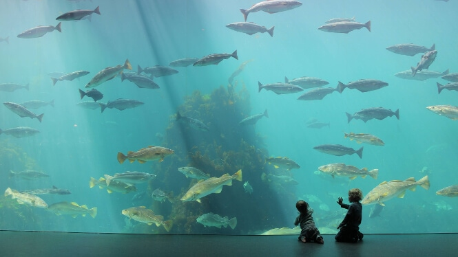 two children observing a huge aquarium tank in the Atlantic Sea Park.