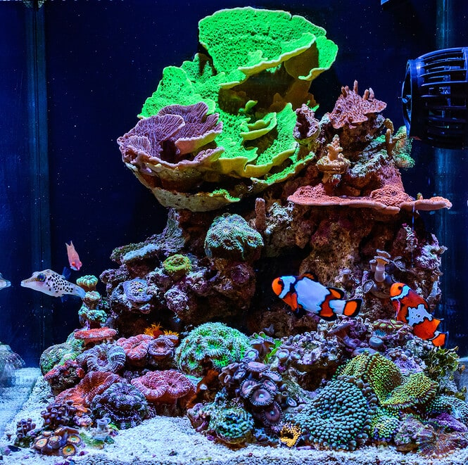 a beautiful small reef tank with corals and fish