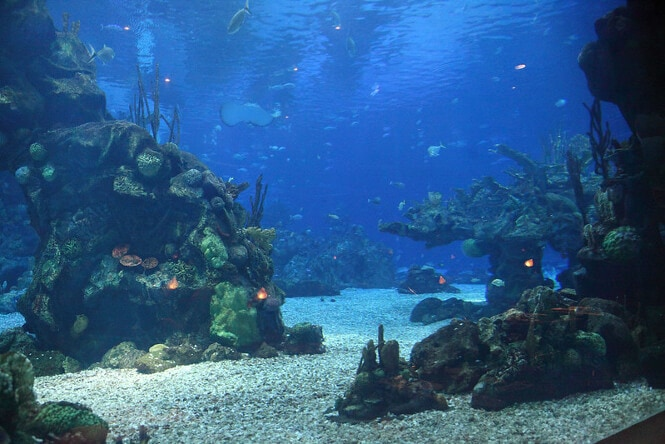 An amazing view inside the Epcot Aquarium of Disneyworld.
