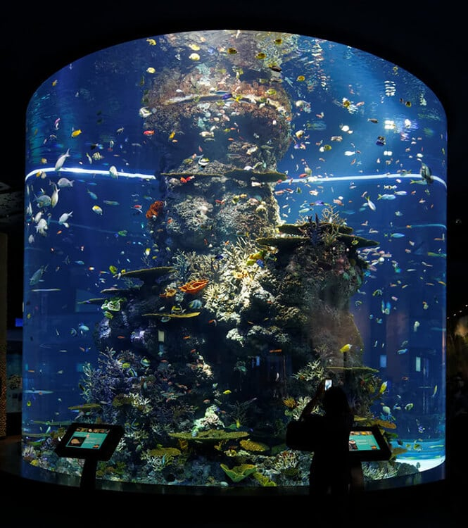 S.E.A. Aquarium is the second-largest aquarium in the world.
