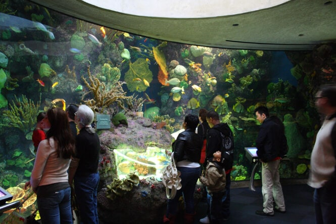 Tourists observing a large reef tank at the Shedd Aquarium in Chicago.
