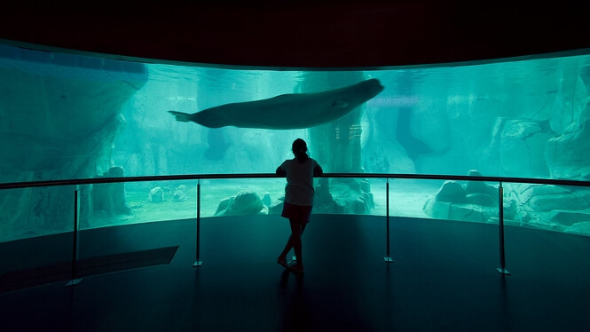 A cinematic view within The Oceanographic Aquarium of Valencia, Spain.