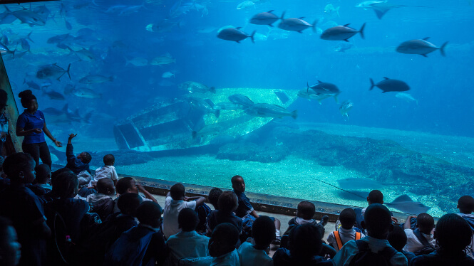 uShaka Marine World Aquarium