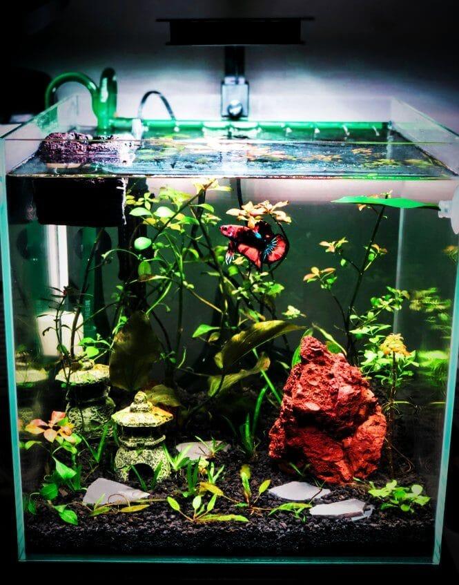 A well-decorated Betta fish tank.
