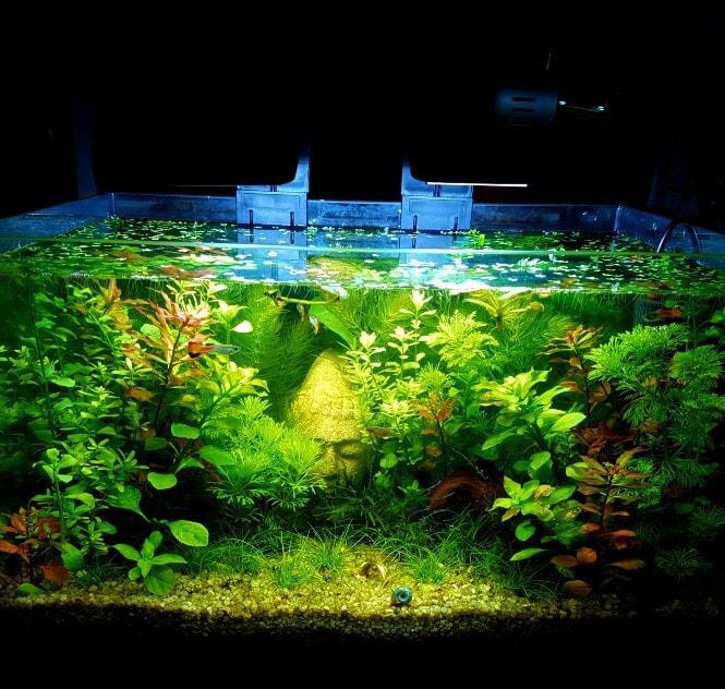 A planted 5-gallon aquarium setup