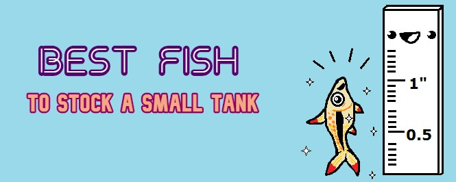 best fish for small tank header