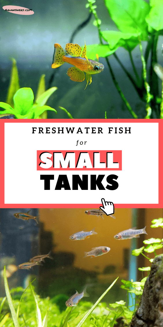 fish for small tanks poster
