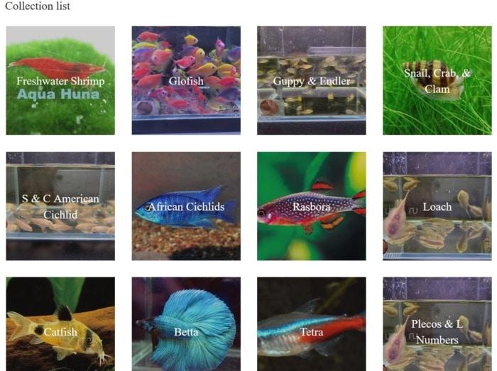 AquaHuna website homepage