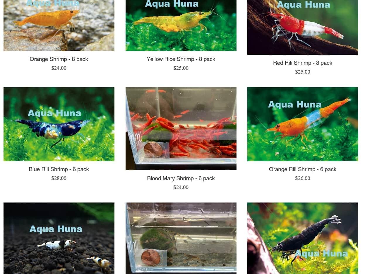 AquaHuna selection of freshwater shrimp