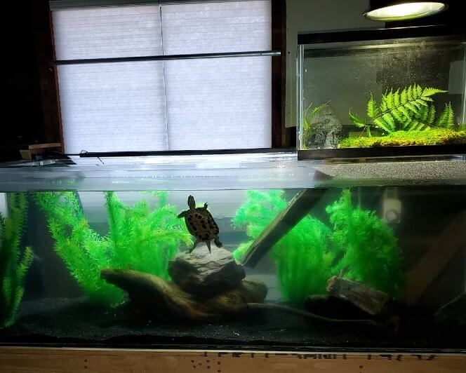 a turtle habitat with a nice basking area