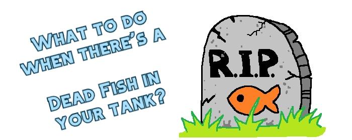 dead fish in tank header