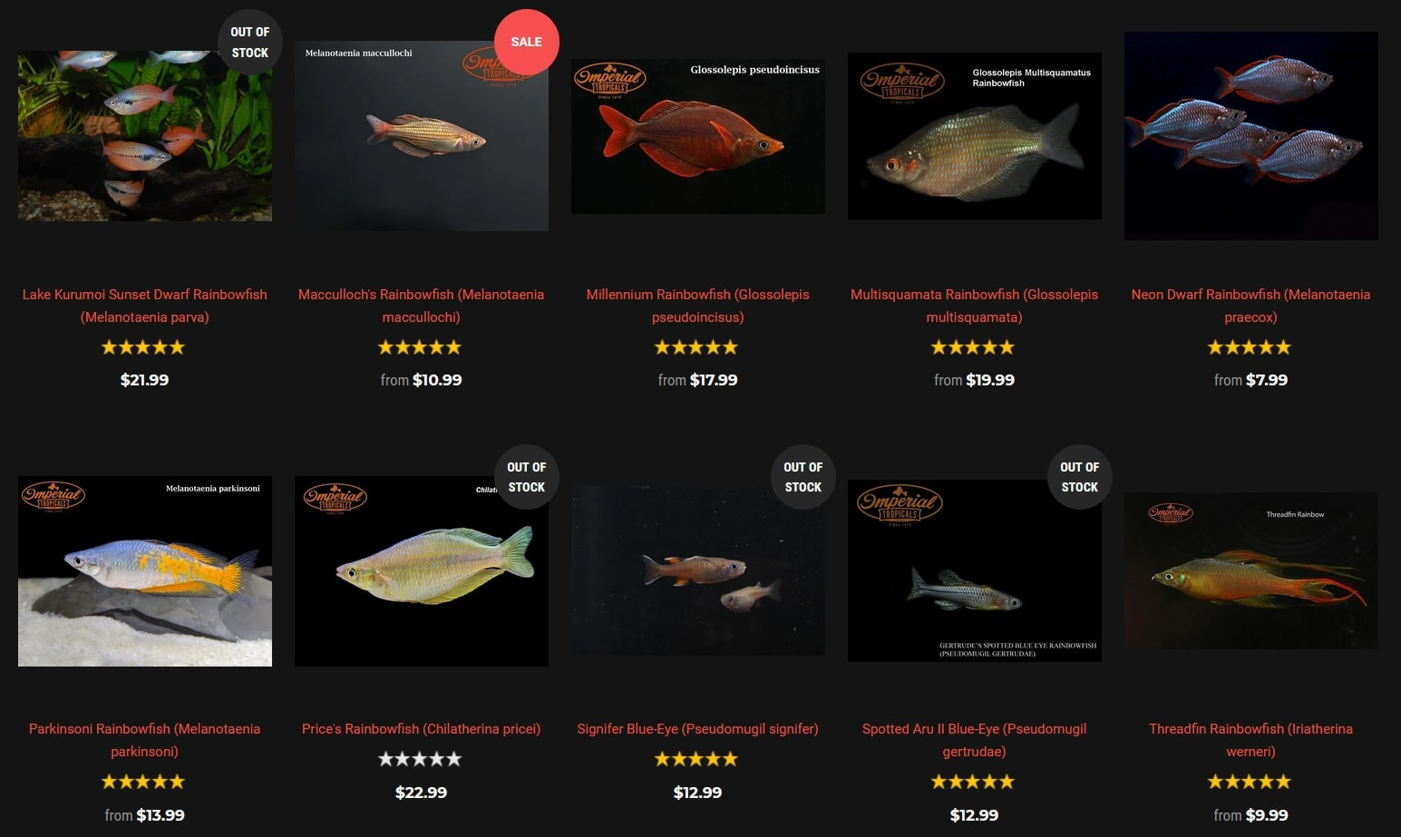 imperialtropicals has a good selection of rainbowfish to buy from